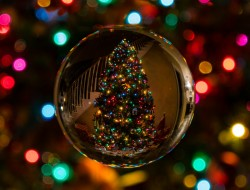 Recycle Your Christmas Tree With Gone for Good